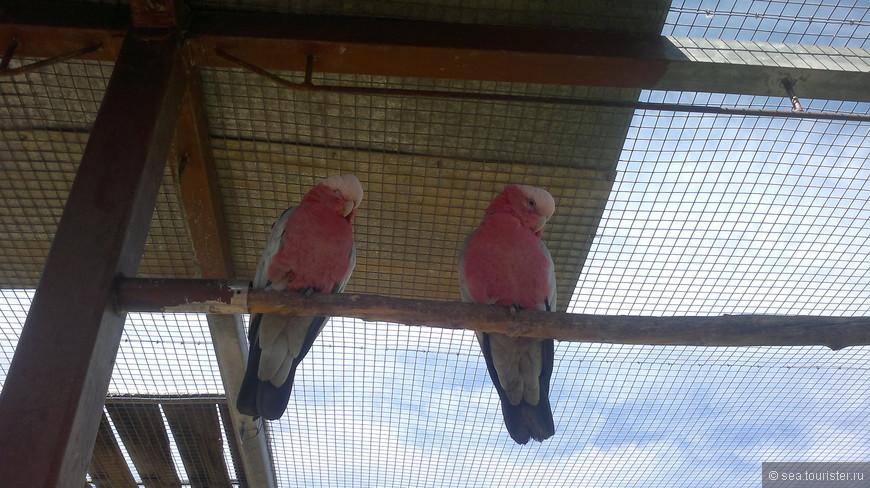Здесь можно погулять в птичьих вольерах и даже покормить пернатых с рук.