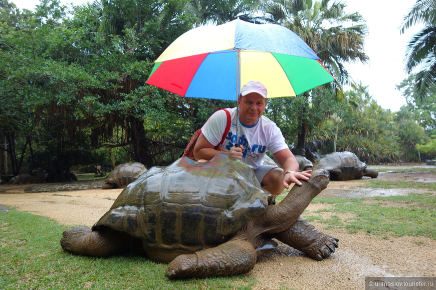 Черепаховая ферма. Когда-то, в 16-17 веках, остров Маврикий славился своими гигантскими черепахами. Но голландские моряки их извели, используя в качестве живых консервов для морских переходов. Поэтому эти черепахи не автохонты. Они завезены.
