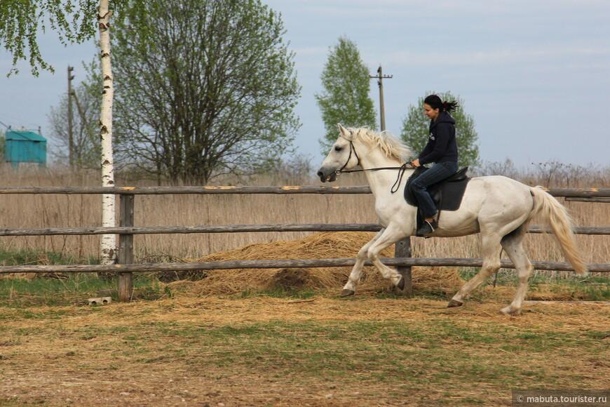 Все 33 удовольствия отдыха в частном доме с частной конюшней! Фото Балабанова Н.