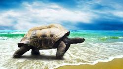 Власти Доминиканы не пускают туристов на пляжи, где гнездятся черепахи