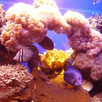 какие чуднЫе кораллы - как икринки