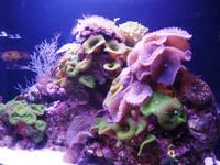 Познаем подводный мир