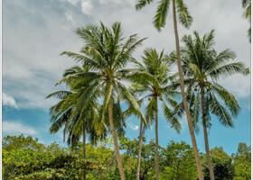 остров Самуи.Сиамский залив Тая.
