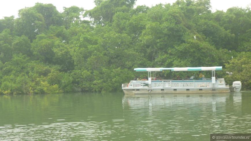 Экскурсия на реку с сакраментальным названием Черная река. Цвет воды местами (выше по течению) действительной тёмный вследствии наличия торфа.
