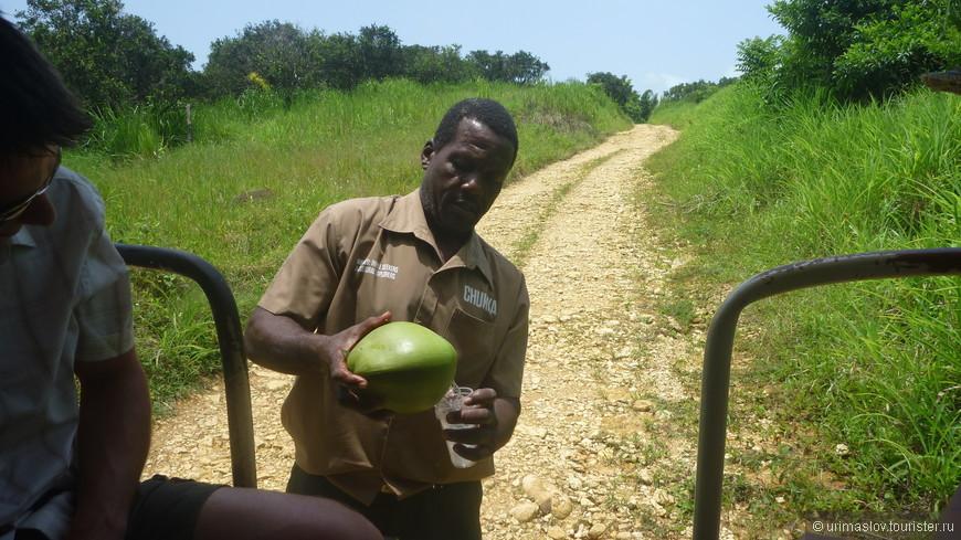 Когда нам захотелось попить, экскурсовод отошёл на 3 минуты, пришёл с кокосами и напоил. Блин, и зачем тогда работать :-)