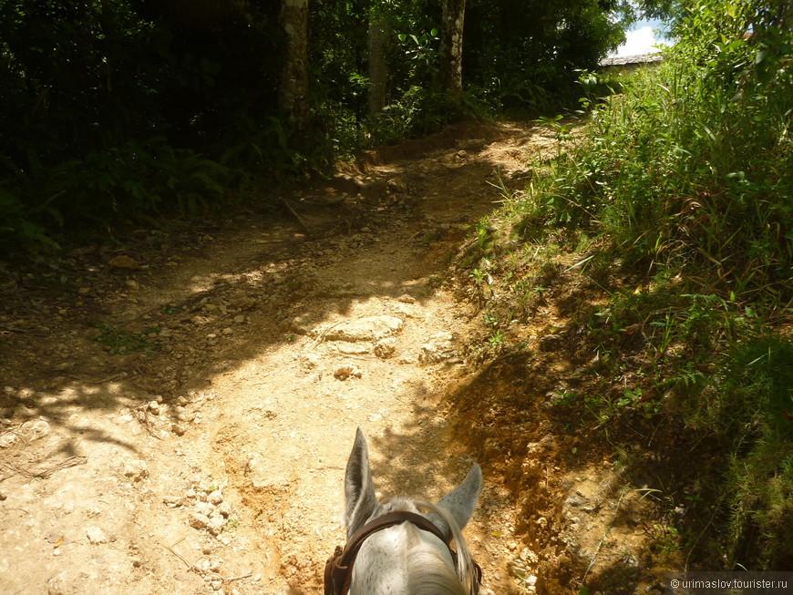 Вот, путь на лошадках к водопаду.