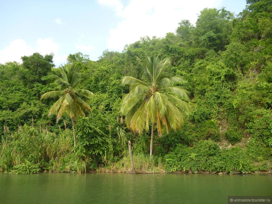 Особо запоминающегося на прогулке по реке не бло. Только буйство природы по берегам!
