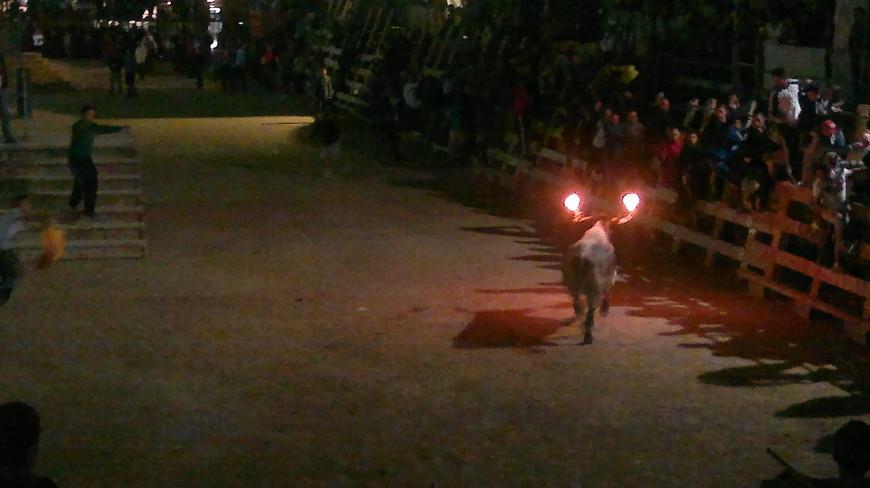 Корову уводят, выпускают быка. Быку на рога прикрепляют специальные установки, которые поджигают.