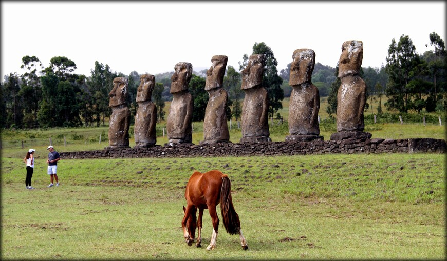Так же это место наиболее известно, поскольку Аху Акиви являлся еще и обсерваторией. Датой сооружения принято считать приблизительно 1500 год нашей эры. Все моаи похожи по стилю и примерно равны по высоте. Их рост 3,6 метра, вес около 18 тонн.