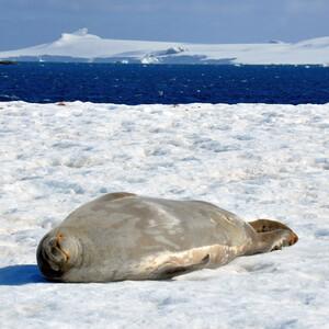 Как не хватает Антарктиды...