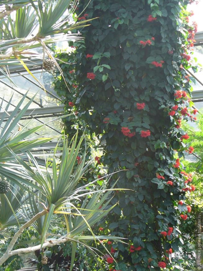 Павильон тропических и влаголюбивых растений
