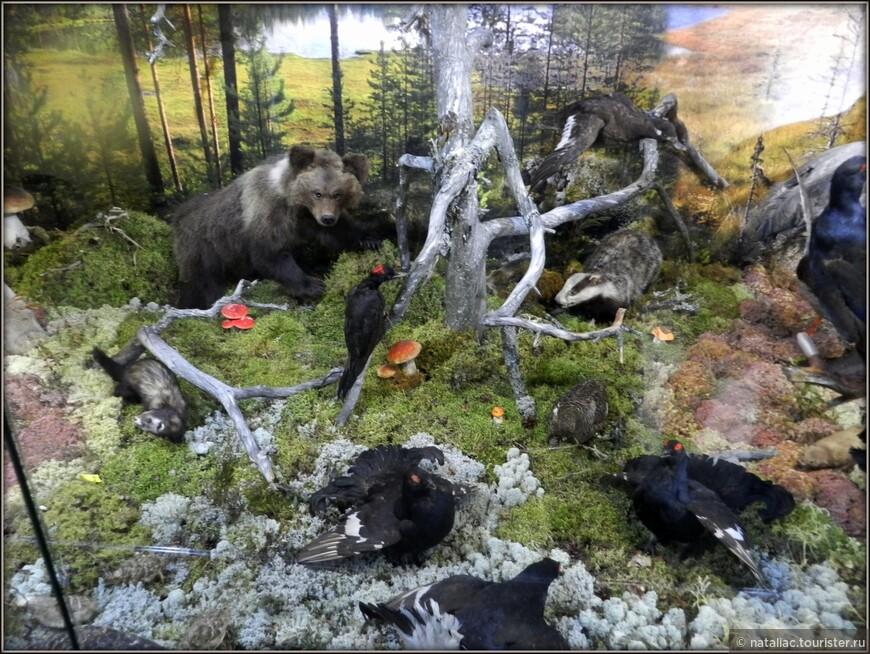 Музей природы заповедника.