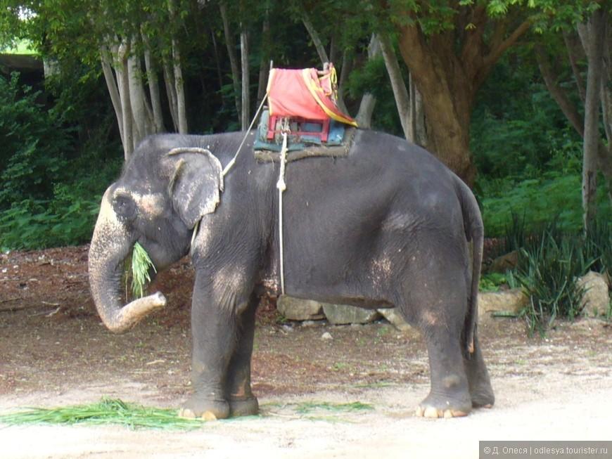 Можно покататься на слоне в Парке миллионных камней