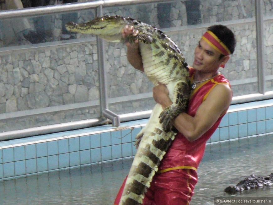 Шоу крокодилов в Парке миллионных камней