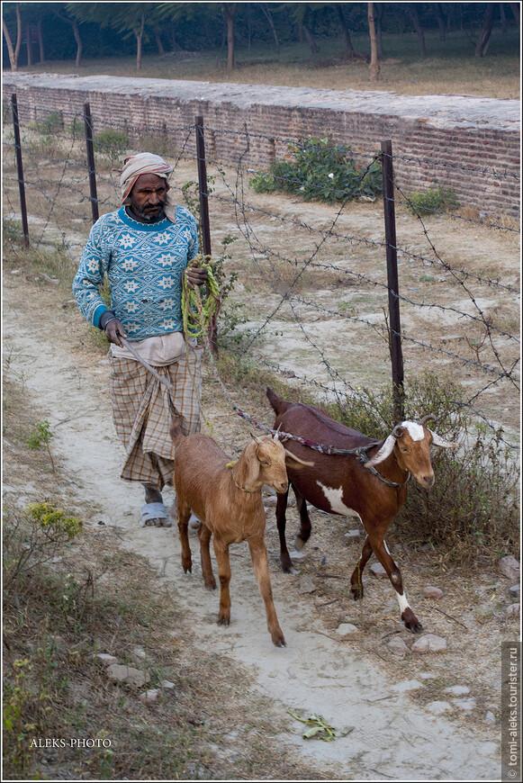 Зато было не жарко. Сопровождавший нас водитель тук-тука пропел для нас какую-то утреннюю суру из Корана и возблагодарил аллаха за возможность зарабатывать для своей семьи хлеб насущный. И все — благодаря нам — туристам. Мимо прошагал колоритный пастух со своими козами...