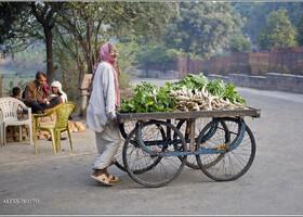 Мысли по пути к Таджу (Индия)