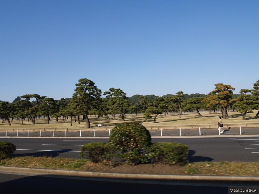 Один из Токийских парков.