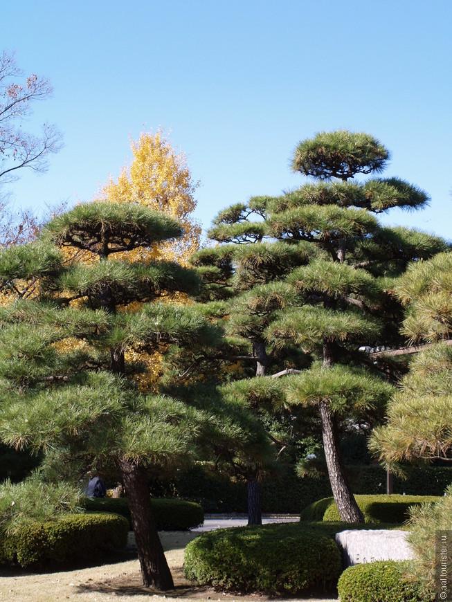 Чистый воздух, зелень, красивые дорожки, что ещё может лучше для отдыха императора.