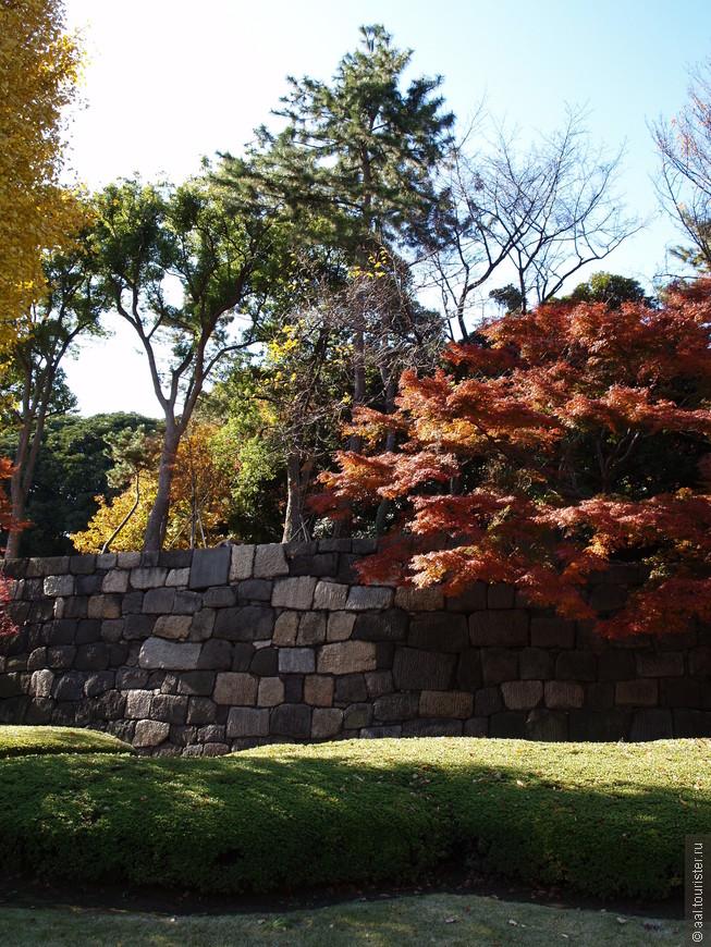 Декабрьский сад поражает красками.