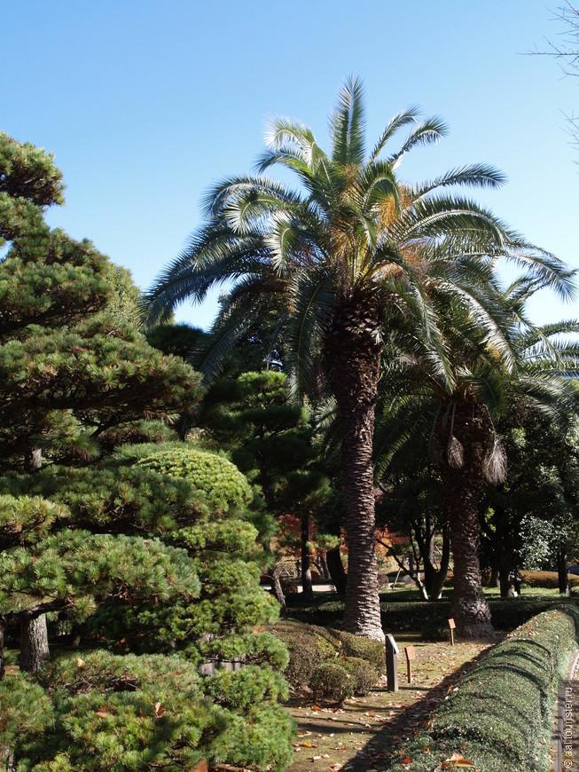 Какой сад без пальм.