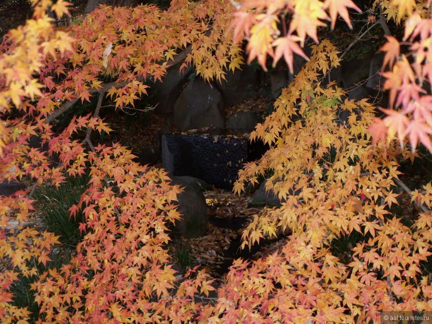 Закрытый осенней листвой бежит ручеек. Тишина. И только журчание ручья нарушает её.