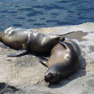 Морской зоопарк в Бремерхафене