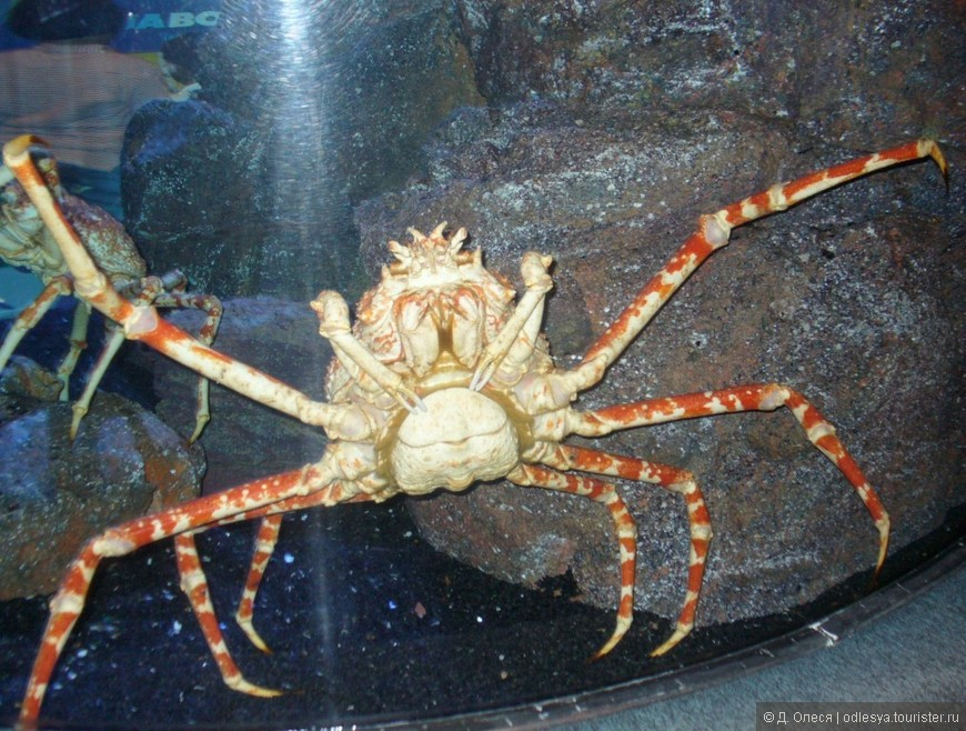 аквариум Siam Paragon