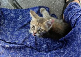 Чайки и кошки Стамбула :)