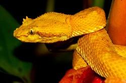 Власти Бразилии запретили отдыхающим посещать остров, на котором много ядовитых змей