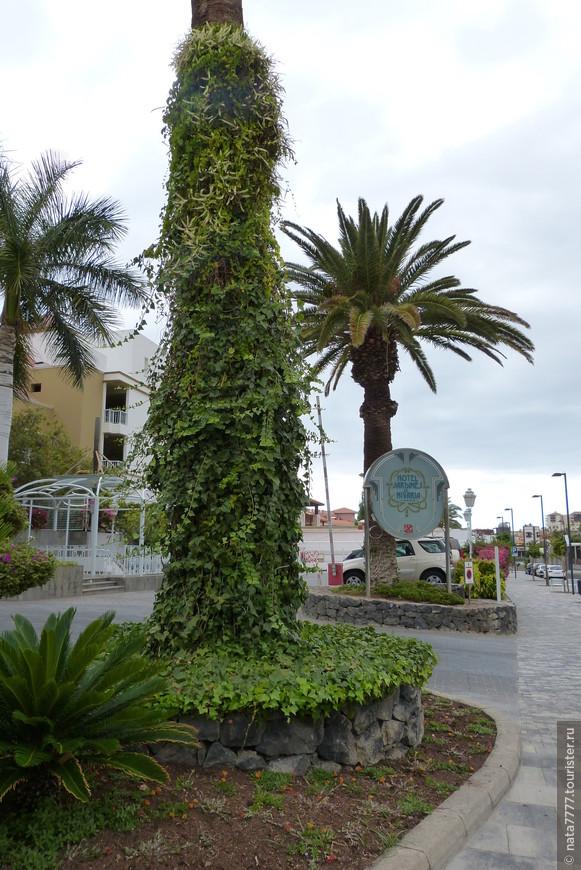 На улице острова Тенерифе, Испания, Канарские острова.