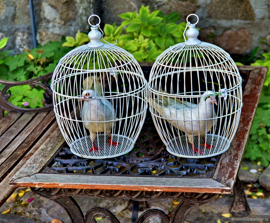 голубей по традиции выпускают на свадьбе
