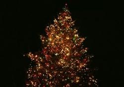 Установлена самая большая новогодняя елка в мире