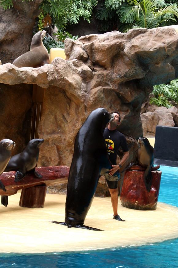 Милое шоу с морскими котиками в Лоро Парке на острове Тенерифе.