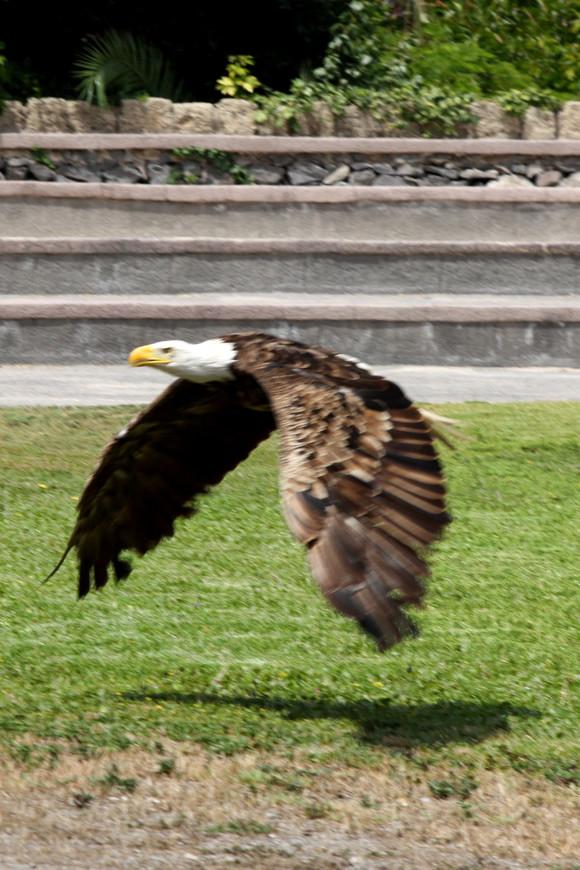 Парк птиц на острове Тенерифе.