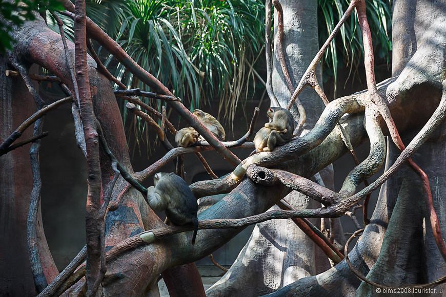 пражский зоопарк (1).jpg