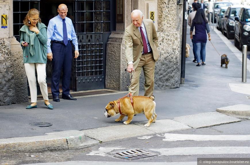 Via Vivaio, выгул собак разрешен!