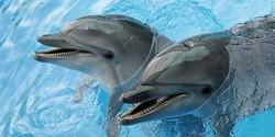 В Судаке по решению суда закрыли дельфинарий «Немо»