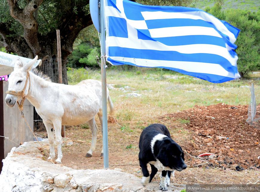 Патриотизм греческих осликов просто умиляет.