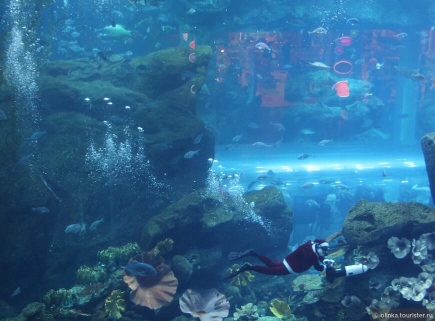 В аквариуме в Дубай-молл плавал Санта-дайвер :) Вернулись домой с новогодним настроением!