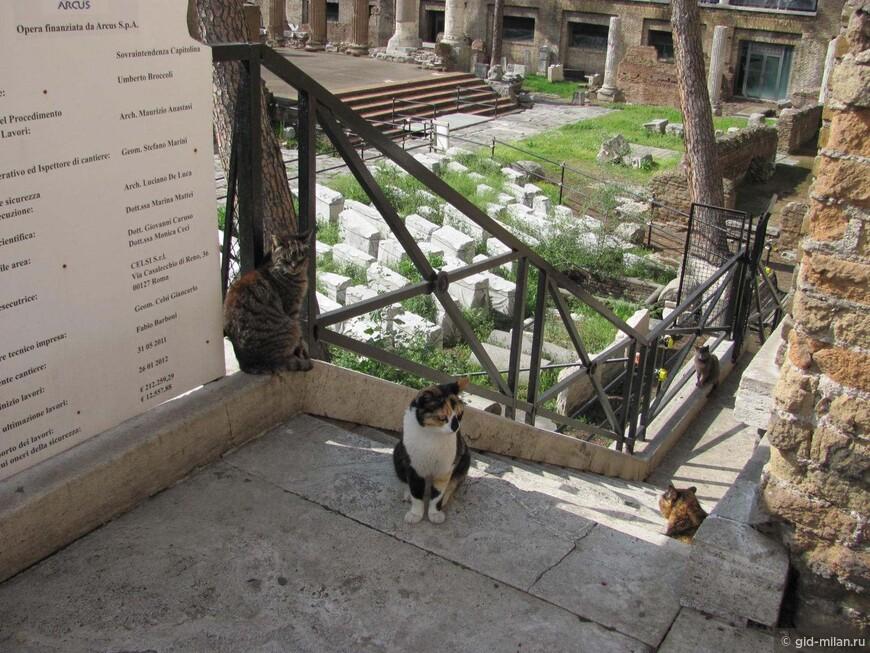 Кошкин дом на римском форуме