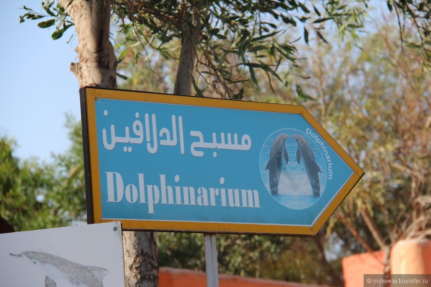 Дельфинарий!