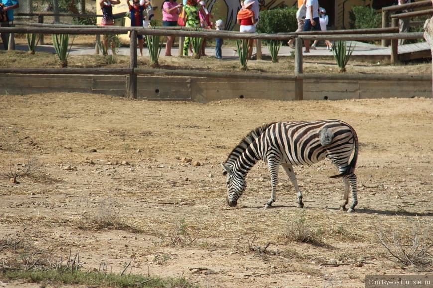 В зоопарке Фригия не так много растительности, как хотелось бы.