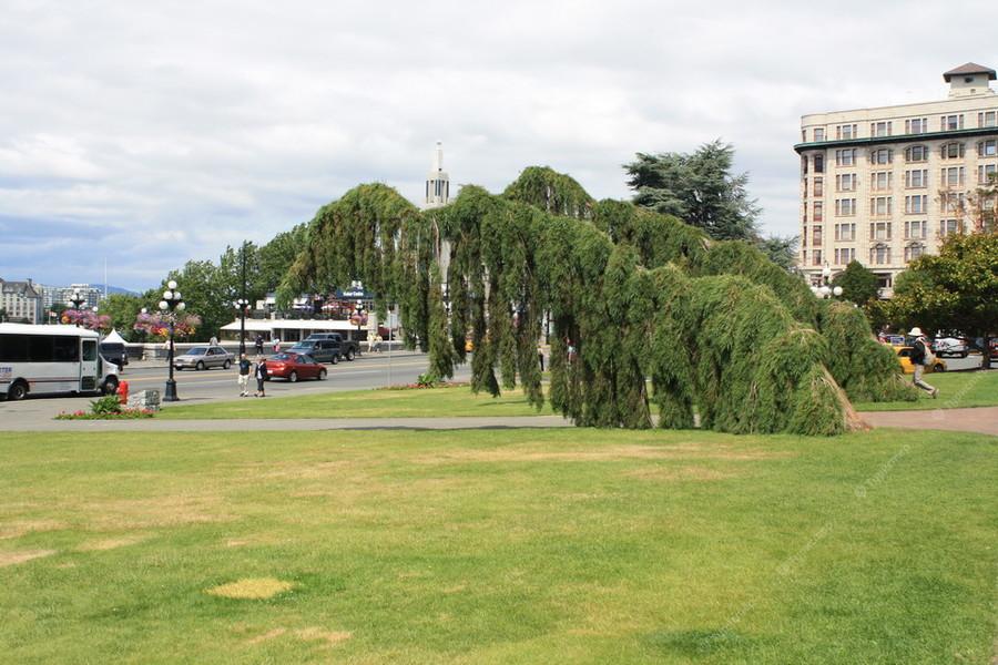 следующий ванкувер канада сады виктории фото этой статье прописные
