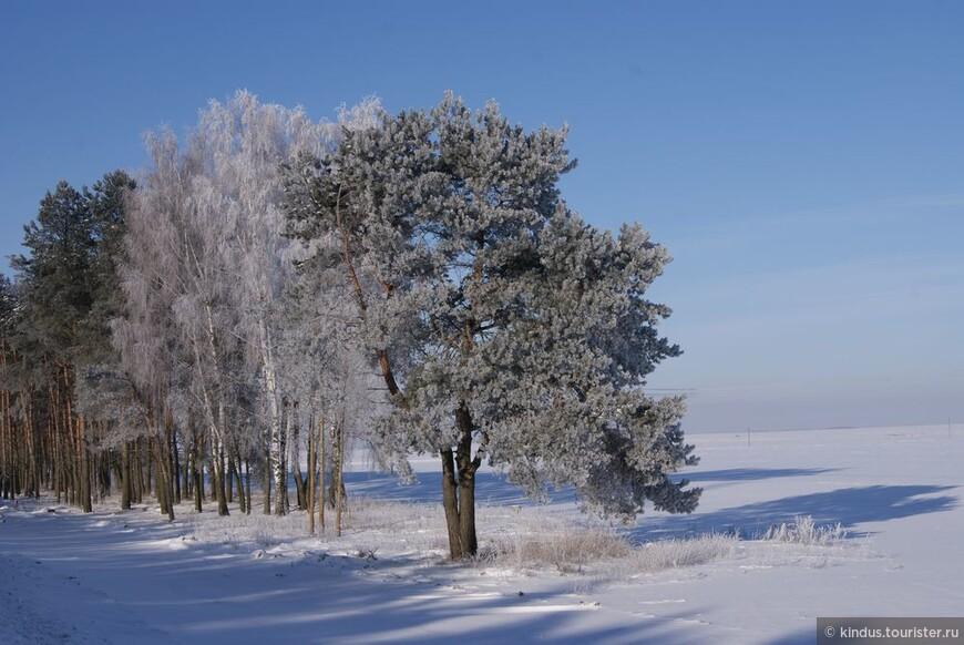 ...деревья.