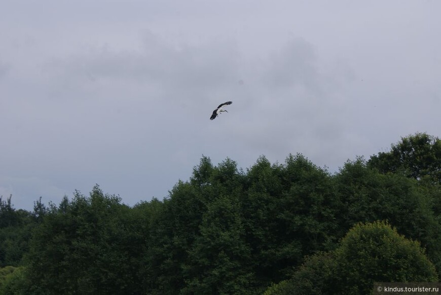 Белый аист летит, всё летит над родными полями, землю нашей любви осеняя большими крылами.