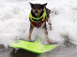 В Италии на пляжах появились собаки-спасатели