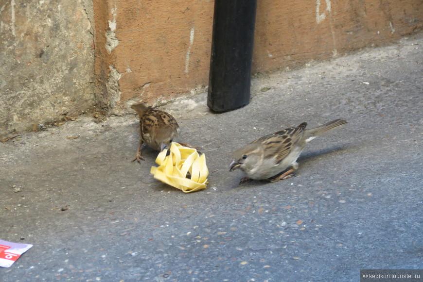 Воробьи в Риме питаются исключительно  пастой, которую они стащили с тарелки выставленной с целью рекламы перед  рестораном.