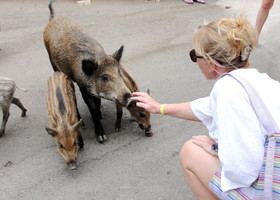 На территории отеля в парке все животные кроме лошадок, страусов и взрослых баранов гуляют свободно.