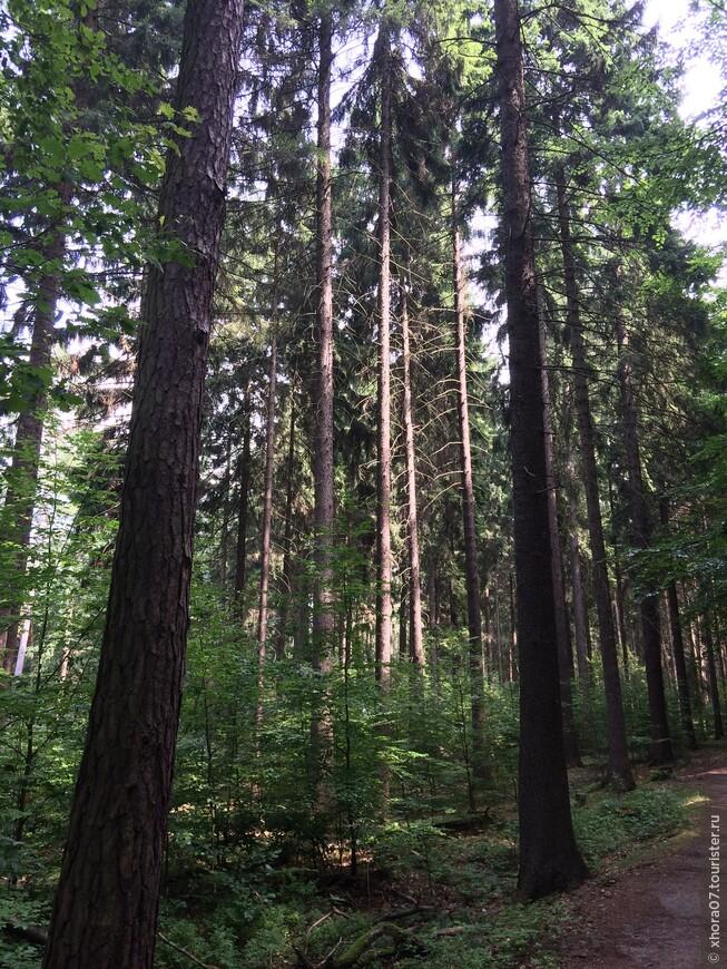 """Прекрасный парк """"Саксонская Швейцария"""" , открытый в 1956 году в ГДР , в рамках """"Программы национальных парков Германии""""."""