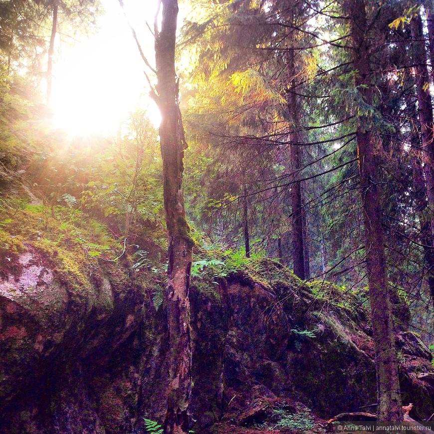 3а день до Нууксио, посмотрели фильм Малифисента, гуляя по лесу у нас было полное ощушение , что мы попали в эту картину...